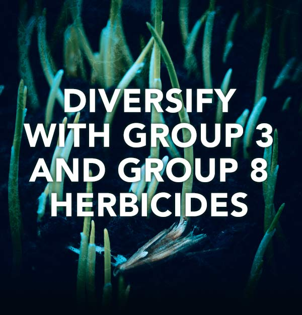 Diversify with Group 3 and Group 8 Herbicides